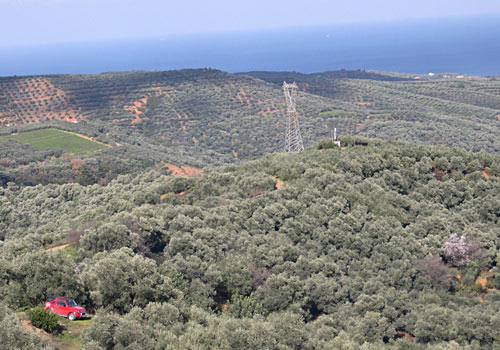 Crete walks: Olive groves west from Chania